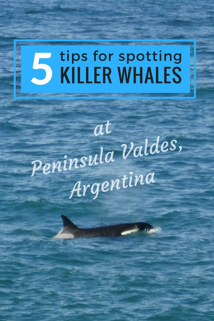 5 tips to spot killer whales pinterest