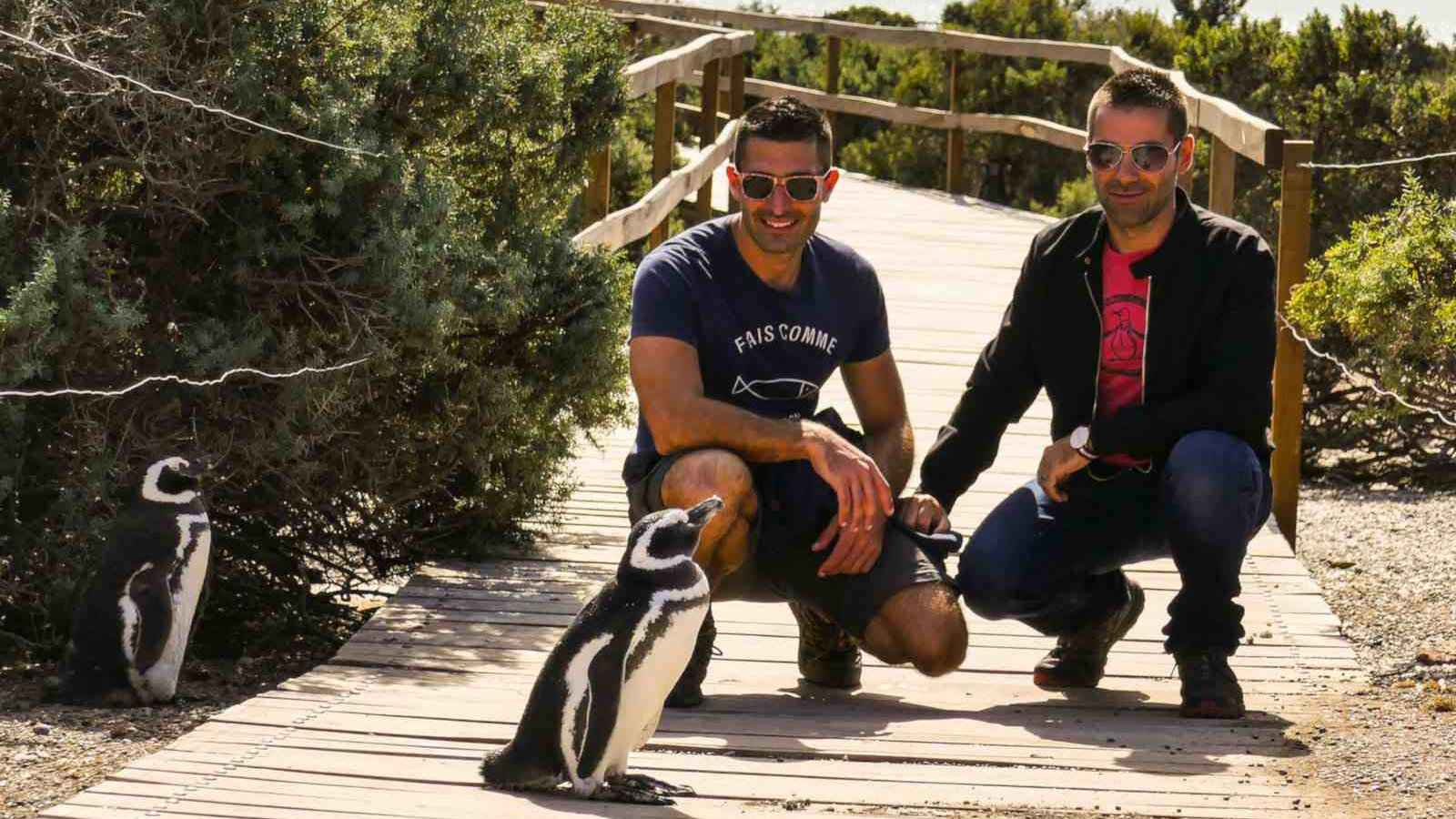 Chile is home to five different species of penguins that you can get surprisingly close to!