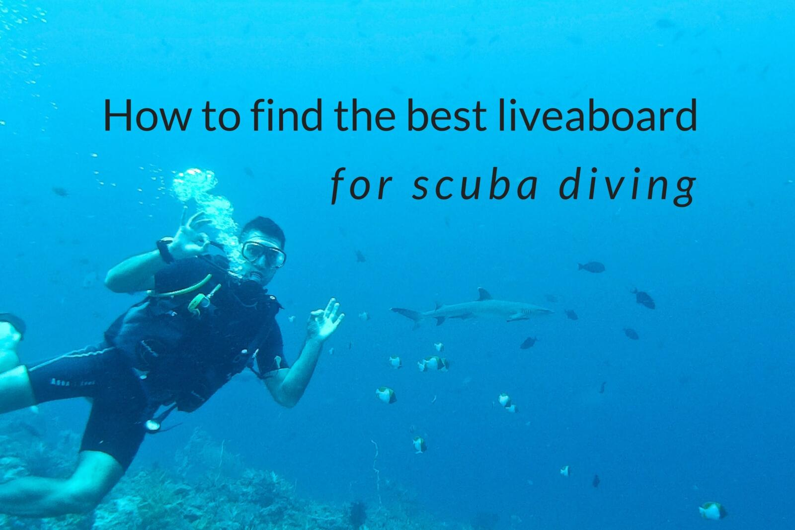 How to find the best liveaboard for scuba diving