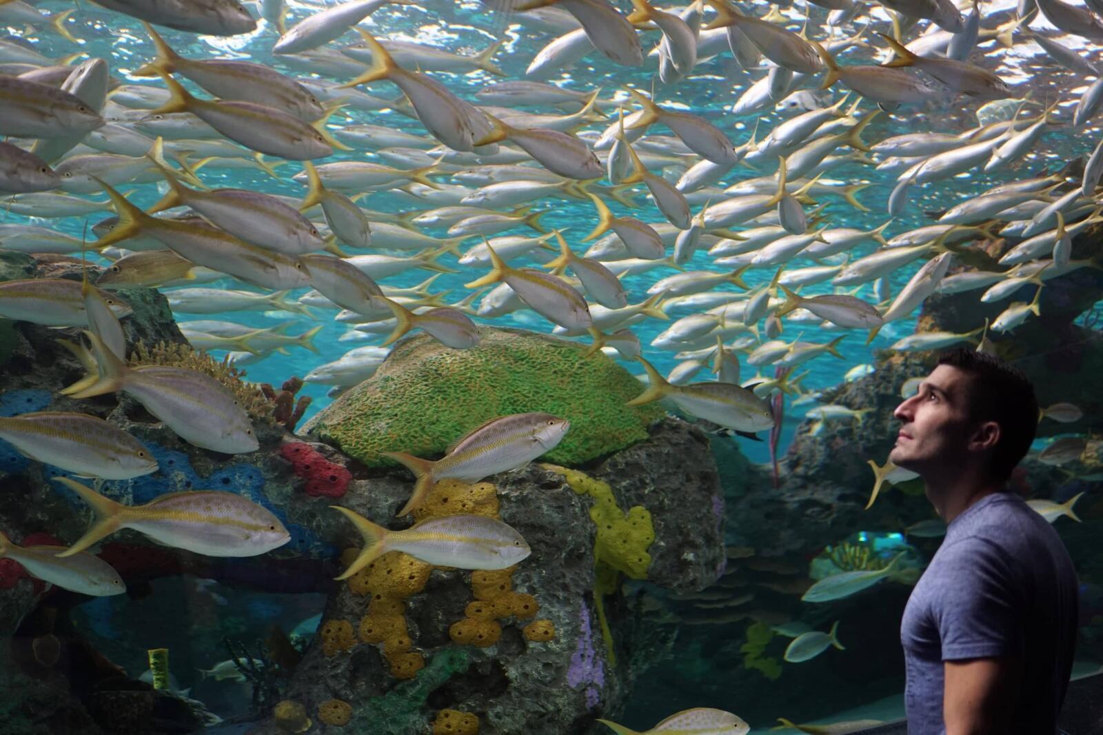 aquarium one of best romantic things to do in Toronto