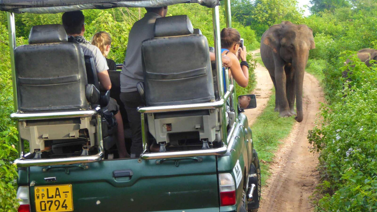The best safari in the world is in Sri Lanka