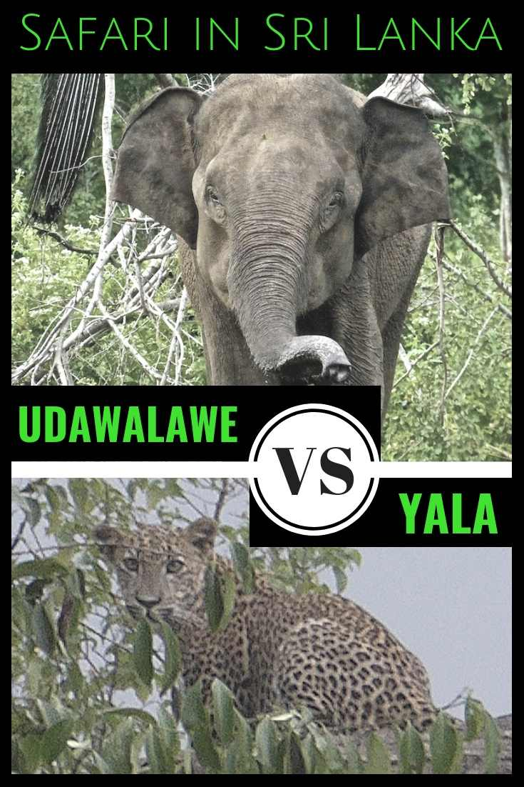 Find out which Sri Lankan safari is best for you as we compare Yala and Udawalale