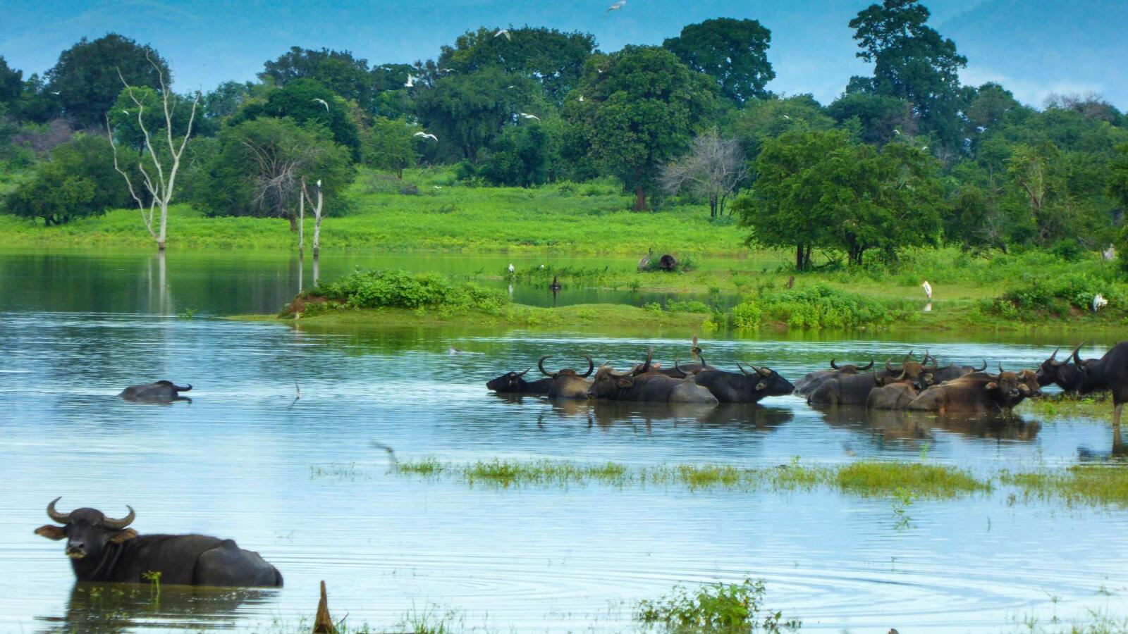 Landscapes of Udawalawe one of best safaris
