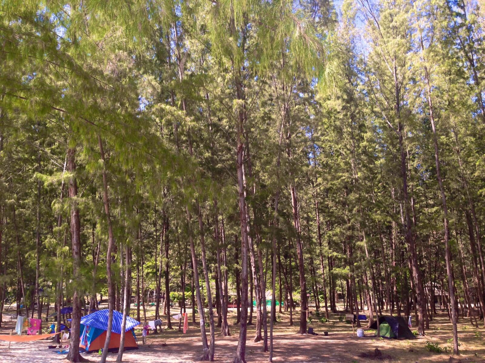 The designated camping ground area of Koh Adang