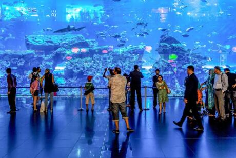 Gay travel to Dubai - Make sure you marvel at the ocean life during a visit to the Dubai aquarium.