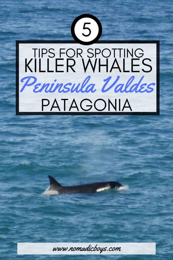 5 of our best tips for spotting Killer Whales on Peninsula Valdes, Patagonia.