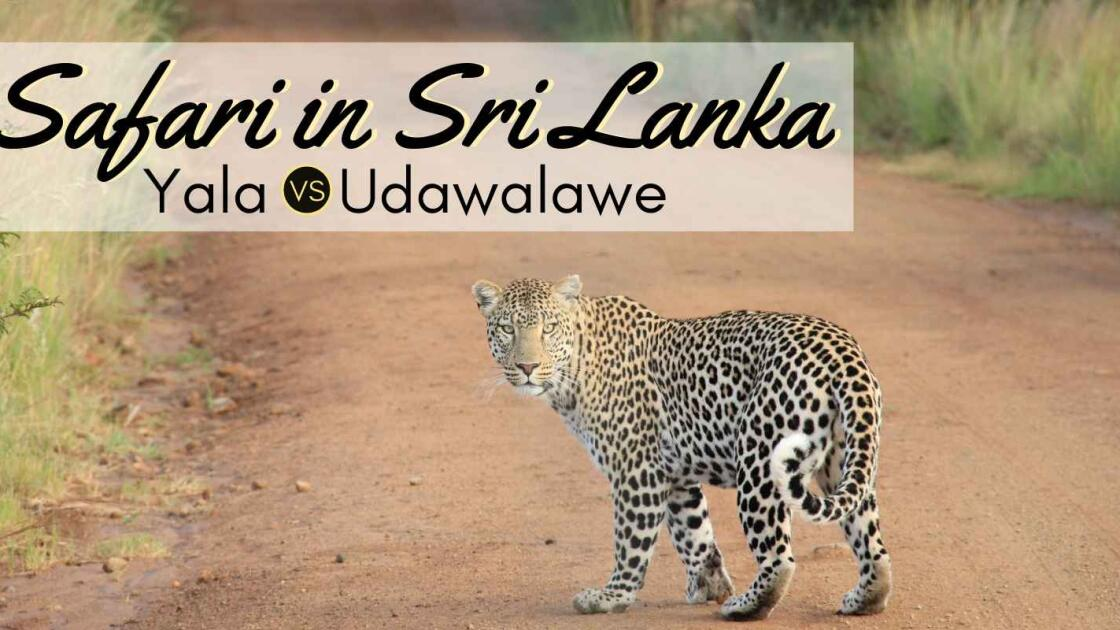 Best Safari in Sri Lanka: Yala versus Udawalawe