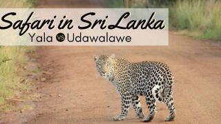 Best safari in Sri Lanka, a complete guide to the safari and wildlife of sri lanka