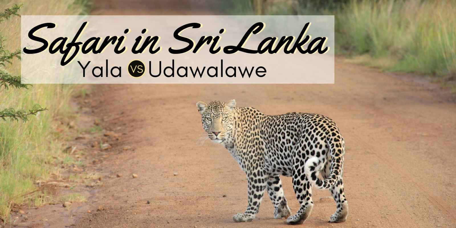 Best safari in Sri Lanka, a complete guide to the safari and wildlife of sri lanka