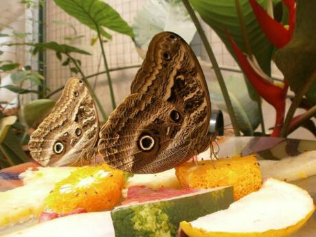 Get up close to native butterflies at the Iguazú Biocentre.