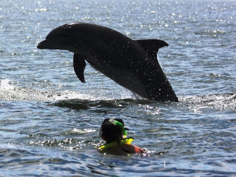 Go swimming with wild dolphins during your visit to Puerto Vallarta.