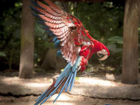 See beautiful macaws and other native birds at the Brazilian Bird Park on a tour from Puerto Iguazu.