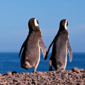 Spot cute penguins and lots of other wildlife during a full day trip to explore the Valdes Peninsula.