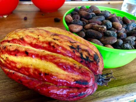 A fun activity during your time in Medellin is to visit a nearby cacao plantation and make your own chocolate!