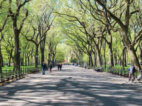 Central Park is a wonderful place to relax, keep fit, explore or go for a romantic horse-drawn carriage ride.