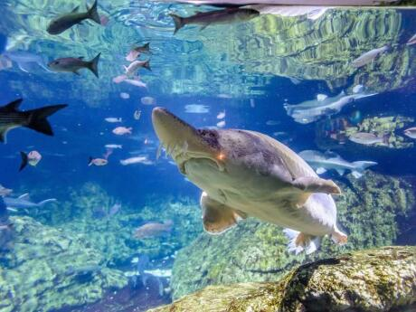 Get up close to dolphins, sharks and fish at Barcelona's aquarium