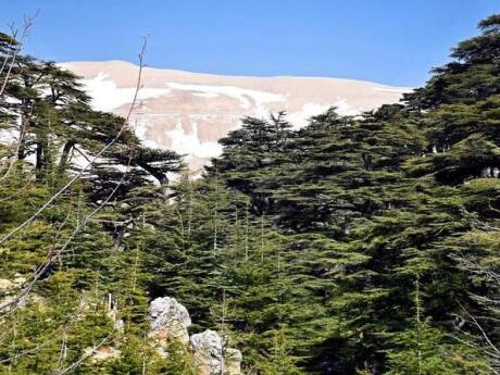 The cedars forest of the Chouf Mountains in Lebanon are a wonderful area to get out of the city and go hiking in a beautiful natural area