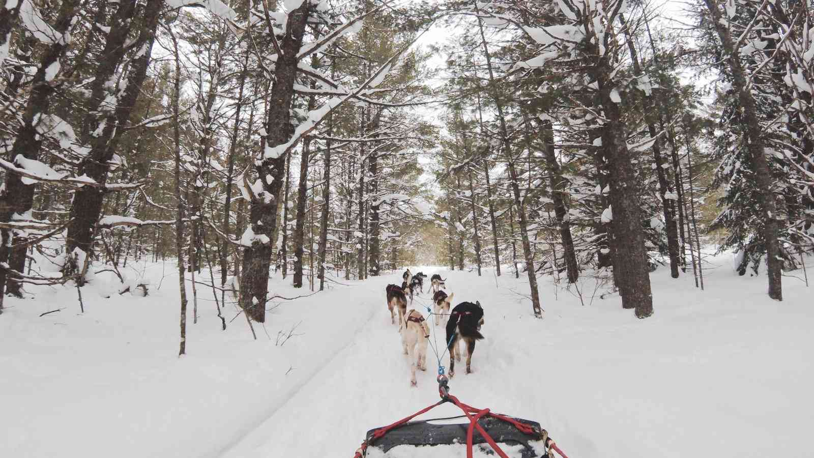 Going dog-sledding with cute huskies is just one of MANY fun things you will get to do during the Elevation Tremblant Gay Ski Week