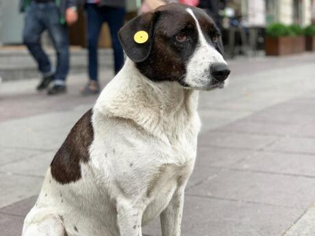 Tbilisi is home to thousands of stray dogs, but they're reasonably well looked after and friendly