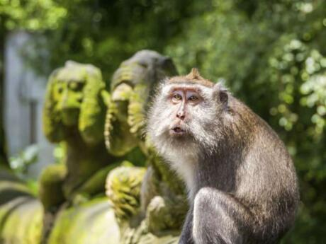 We loved the cheeky monkeys at the Monkey Sanctuary in Ubud - just be careful they don't jump on you!