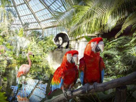 Parc Phoenix is an incredible attraction in Nice, part zoo and part stunning garden