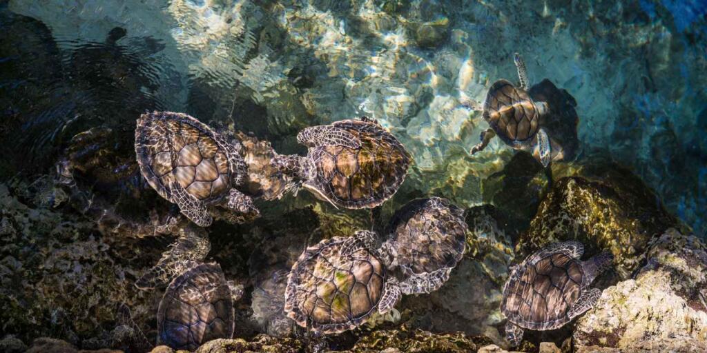 mexico turtles