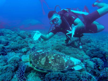 The island of Sipadan is an excellent spot to go diving in Malaysia