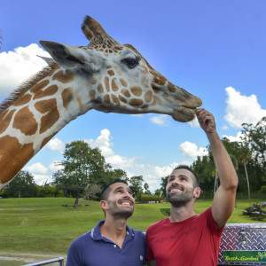 If you like animals and exciting rides, then you'll love Busch Gardens in Tampa