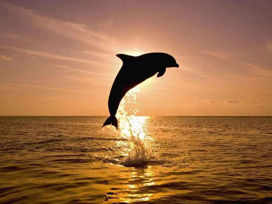 You may spot dolphins from the beaches in Tampa and by joining a romantic sunset cruise you're almost guaranteed to see them!