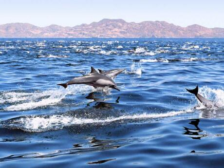 In Gran Canaria you will probably get to see lots of wild dolphins frolicking in the sea!