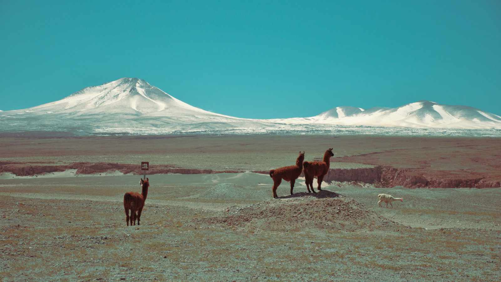 Find the best things to do while you're visiting the fascinating country of Chile