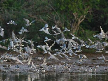 Wildlife lovers won't want to miss out on exploring the Muthrajawela Wetlands while visiting Negombo