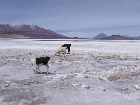 The Salinas Lake is a gorgeous salt lake just two hours away from Arequipa in Peru