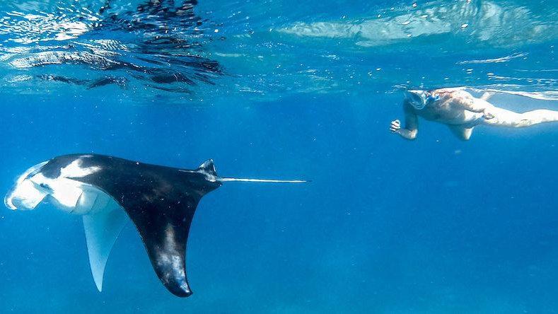 Mergulho com a vida selvagem é apenas um dos destaques da nova Your Private Journey da Everything to Sea