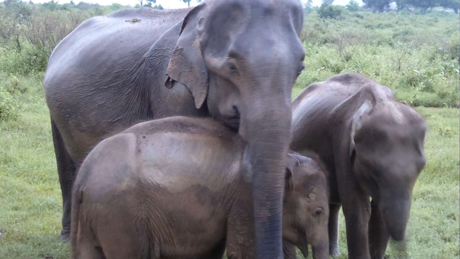 Udawalawe National Park is the best place to see elephants in Sri Lanka