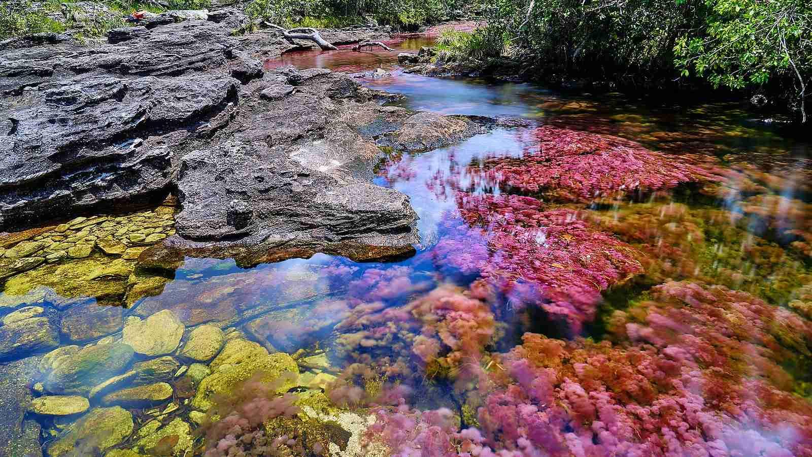 Na Colômbia é um rio que se torna um arco-íris quando a estação está certa