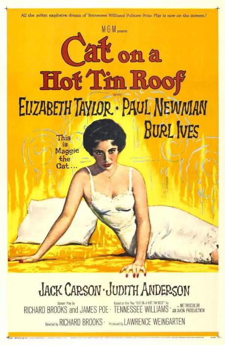 Cover of the book Cat on a hot tin roof with Maggie the cat