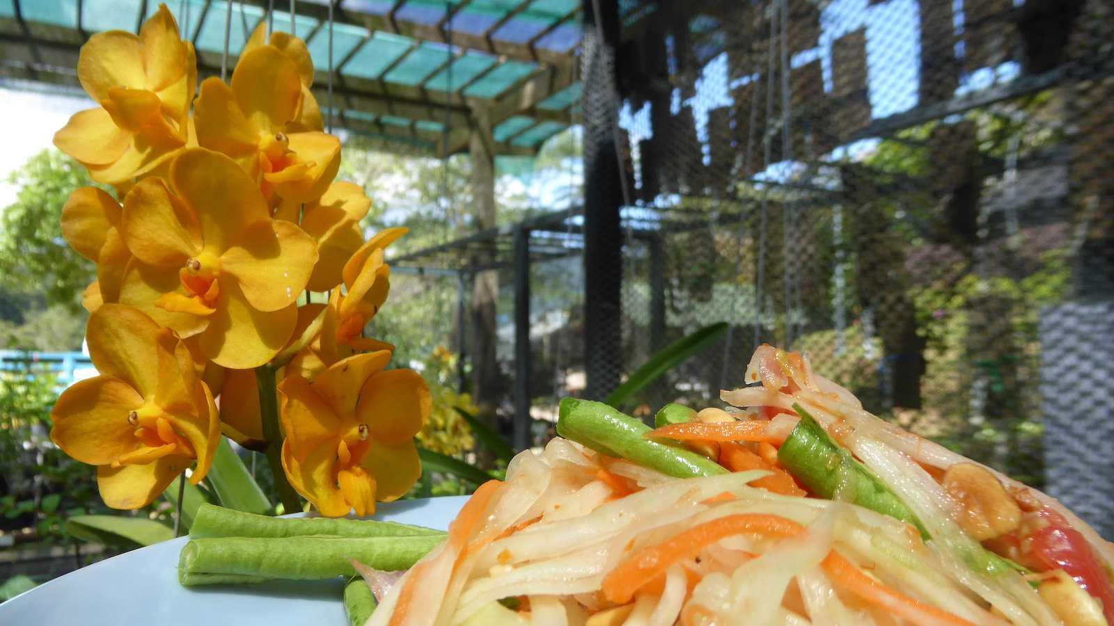 Som Tam é a salada mais popular da Tailândia e uma mistura ardente de sabores picantes, doces, salgados e ácidos