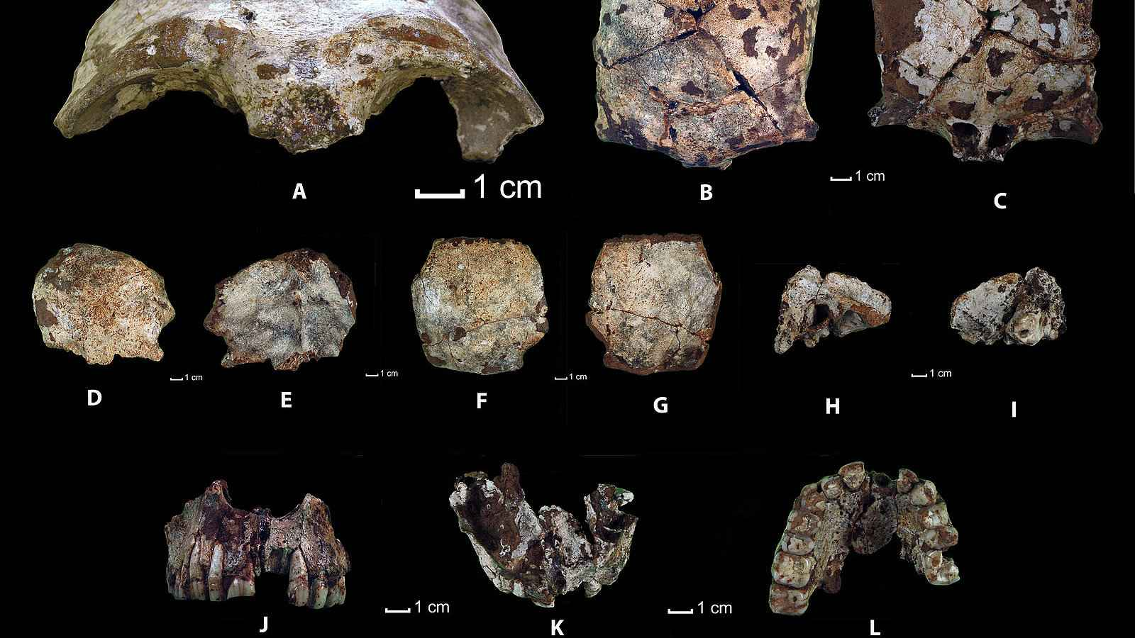 The oldest human remains in Southeast Asia were found in Laos