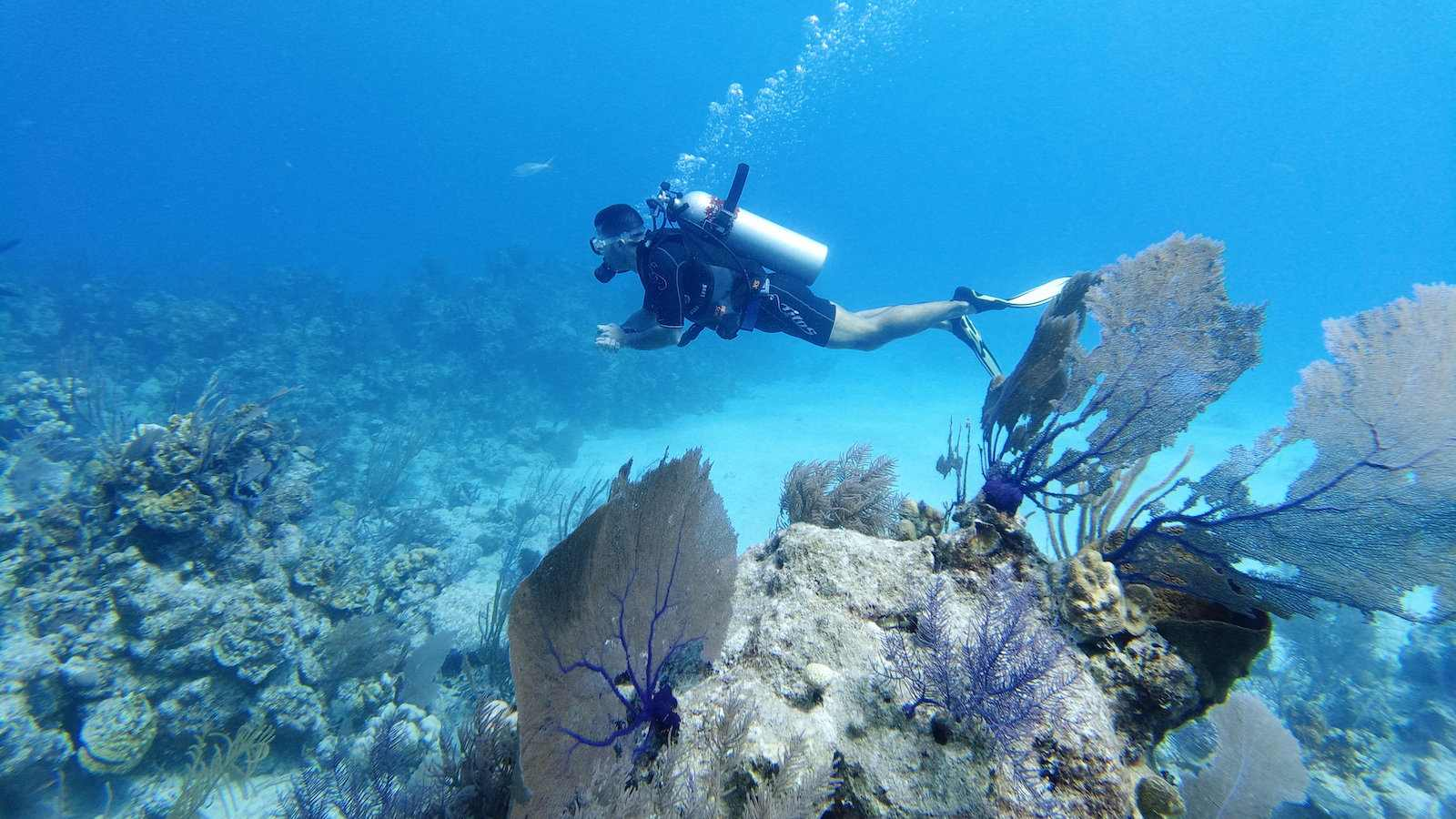 Scuba diving in Mexico's Sea of Cozumel is even better on a gay diving vacation