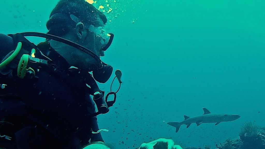 This gay scuba diving trip to Fiji is one of the best in the world for diving with sharks