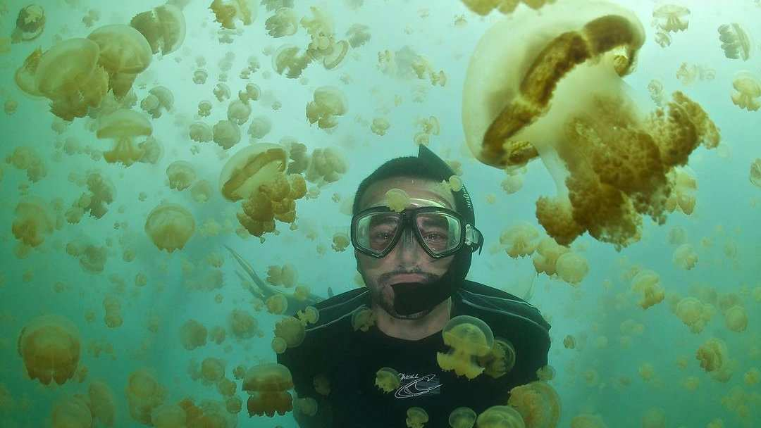 This gay scuba expedition to Palau includes the chance to swim in the famous Jellyfish Lake