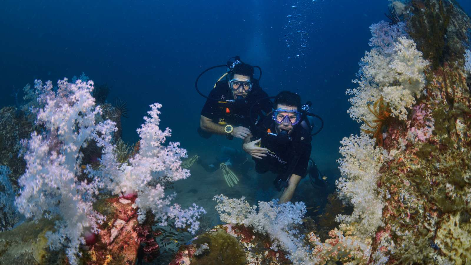 Spot incredible coral while diving in the Red Sea on a gay diving trip in Egypt