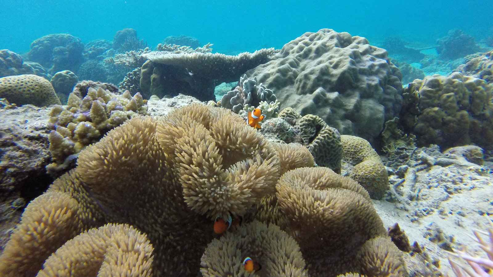 Enjoy a gay scuba vacation in the incredibly gay friendly country of the Philippines