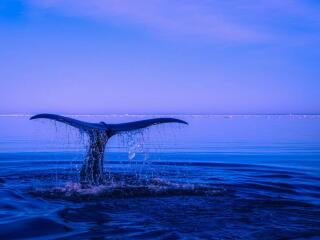 Use this guide to see blue whales in Mirissa, Sri Lanka