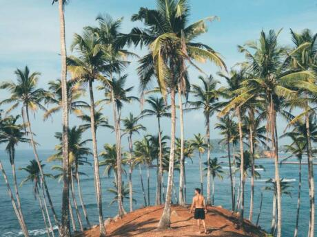 Coconut Tree Hill is a private coconut plantation that's a lovely walk in Mirissa