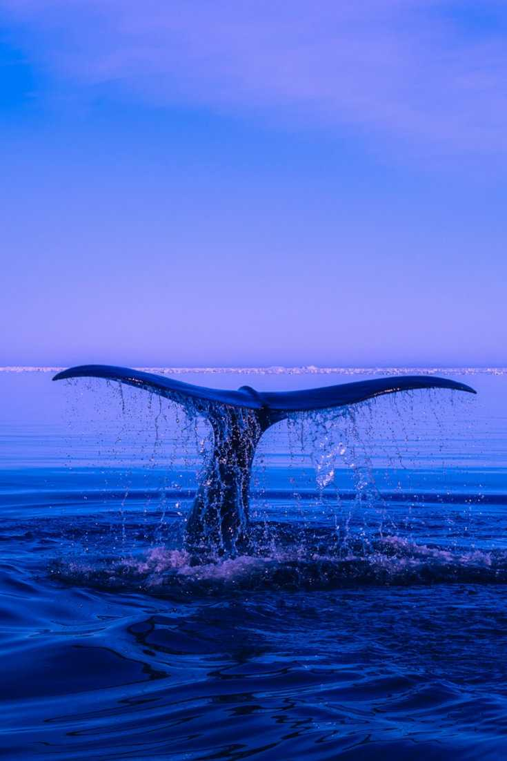 Find out how to see blue whales in Mirissa, Sri Lanka
