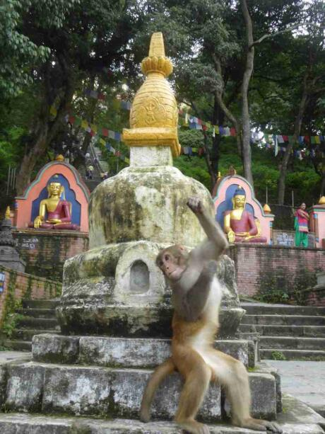 Swayambhunath is a temple complex in Kathmandu with cute holy monkeys living in the grounds