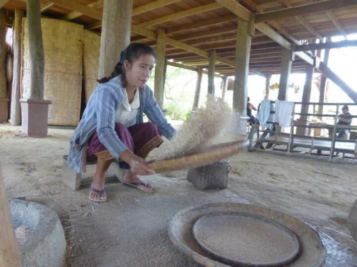 The Living Land Farm Experience is a must-do in Luang Prabang to learn about Laos rice-farming