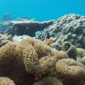 Tour C from El Nido is our personal favorite for snorkeling and seeing tropical fish